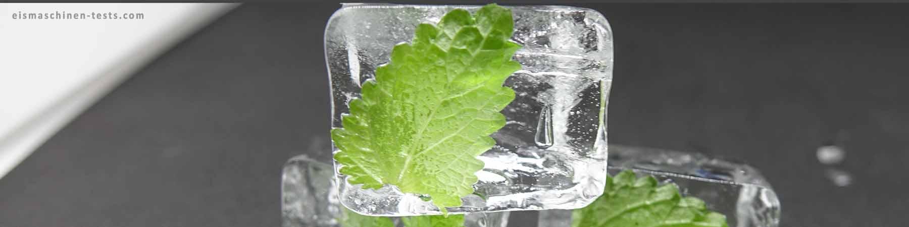 Zitronenmelisse Eiswürfel selber machen - Eismaschinen Tests com - Slider