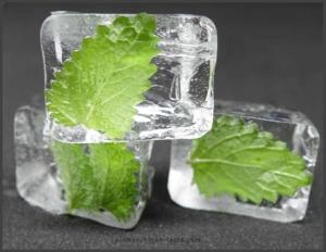 Zitronenmelisse Eiswürfel selber machen - Eismaschinen Tests com - Bild2