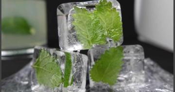 Zitronenmelisse Eiswürfel selber machen - Eismaschinen Tests com - Bild1